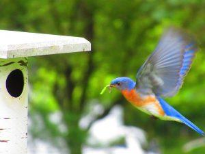 Park Rapids Area Wildlife
